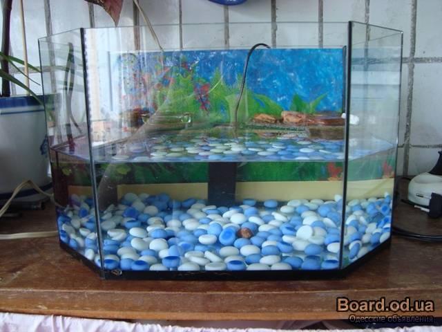 Видео аквариум для красноухой черепахи своими руками
