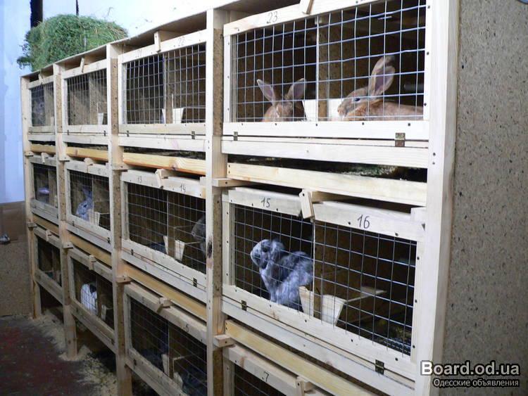 Домик для кроликов фото своими руками