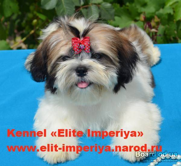 сайт элит бренд породистых собак термобельем