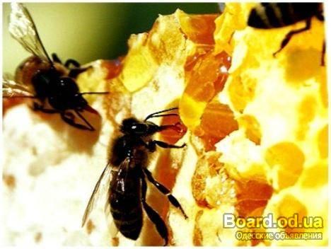 Поздравление для пчеловода